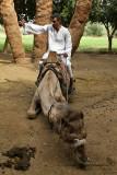 Louxor - 142 Vacances en Egypte - MK3_8983_DxO WEB.jpg