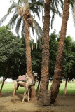 Louxor - 153 Vacances en Egypte - MK3_8994_DxO WEB.jpg