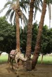 Louxor - 154 Vacances en Egypte - MK3_8995_DxO WEB.jpg