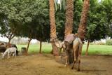 Louxor - 155 Vacances en Egypte - MK3_8996_DxO WEB.jpg