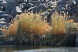 Assouan promenade en felouque - 1093 Vacances en Egypte - MK3_9970_DxO WEB.jpg