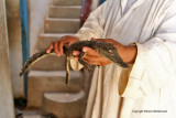 Assouan promenade en felouque - 1131 Vacances en Egypte - MK3_0009_DxO WEB.jpg