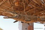 Assouan promenade en felouque - 1140 Vacances en Egypte - MK3_0018_DxO WEB.jpg