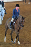 Scottsdale Arabian Horse Show