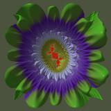 Douady's Rabbit flower