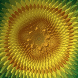 Julia Sunflower