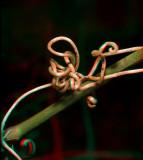 Twined vine 6407.jpg