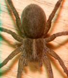 Spider 6491.jpg