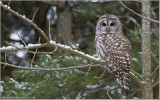 Favourite Owl Images