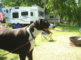 Lucy...big dog