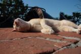 The Nilaya cat