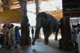 Sri Ranganathaswamy Temple elephant