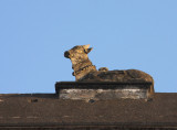 Roof-top nandi