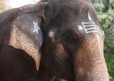 Brihadishwara Temple elephant