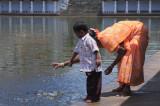 Feeding the fish at the sivaganga