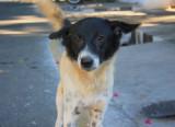 Bharathi Park dog