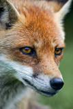 _MG_7984 british wildlife centre.jpg