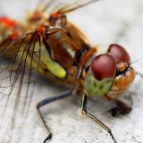 bugs 'n' critters