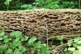 Fungus On A Log, Toronto, Ontario