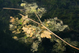 Leaves and Weeds, Boathouse Country Inn, Rockport, Ontario