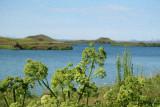 Myvatn = mosquito lake