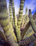 7 Organ Pipe Cactus National Monument, AZ