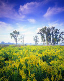 10 Glacial Park, McHenry County, IL