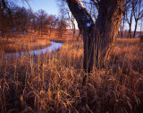 11 Glacial Park, McHenry County, IL