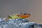 Rettili- Reptilia - Reptiles