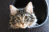 orlando kitten