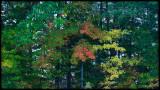 WM-2007-10-20--0190---Great-smoky---Alain-Trinckvel-2.jpg