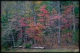 WM-2007-10-20--0860---Great-smoky---Alain-Trinckvel-2.jpg
