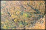WM-2007-10-20--0690---Great-smoky---Alain-Trinckvel-5.jpg