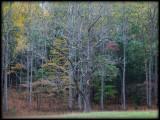 WM-2007-10-20--0875---Great-smoky---Alain-Trinckvel-3.jpg