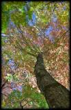 WM-2007-10-20--0346---Great-smoky---Alain-Trinckvel-6.jpg
