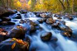 12_Autumn, Leaves.jpg