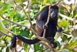 Monkey Momma