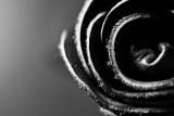 Black Leather Rose