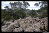Seal lookout scree