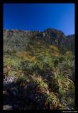 Rodway range and Pandani