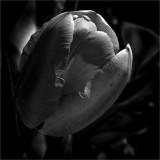 Leica Forum Challenge 37: Glorious Black & White