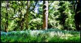 Spring in the woods.jpg