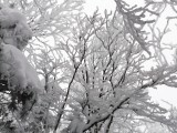 135 Snow encrusted tree branches reminded me of underwater coral.