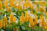 Flores de Guaramiranga