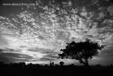 Árvora solitária, Eusébio, Ceara_2076