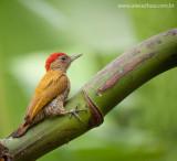 Pássaros de Guaramiranga
