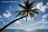 Praia do Patacho, São Miguel dos Milagres- AL 9206-2