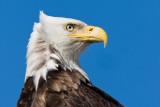 Eagles-Gulls