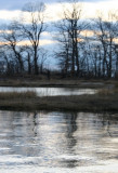 Rye Marsh Ripples