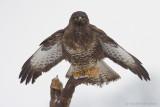 Birds of prey - Roofvogels
